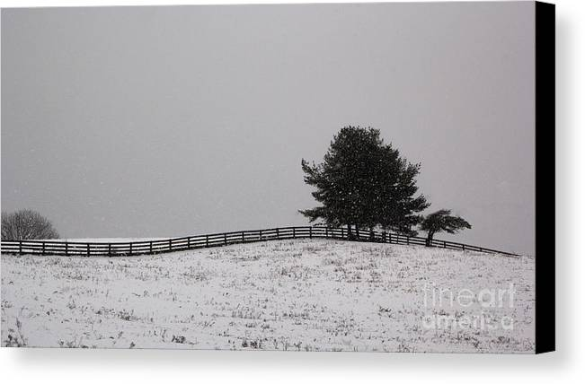 B&w Canvas Print featuring the photograph Tree And Fence In Snow Storm by Brad Marzolf Photography