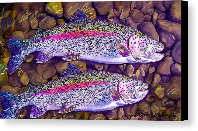 Fish Canvas Print featuring the photograph Two Beauties - Trout by Laird Roberts