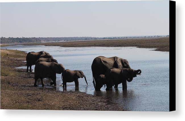 Chobe National Park Canvas Print featuring the photograph Chobe Elephants by Kristen Macks