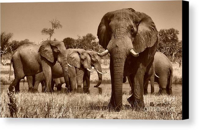 Elephants Canvas Print featuring the photograph Elephants At Khwai River by Mareko Marciniak