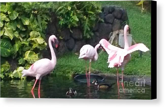 Birds Canvas Print featuring the photograph Flamingo Party by Silvie Kendall