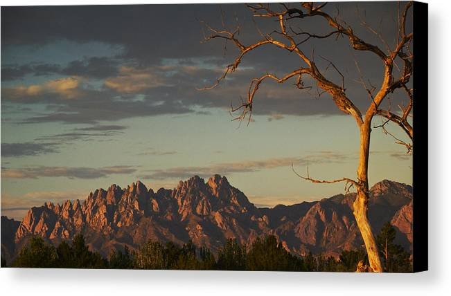 Sunset Canvas Print featuring the photograph Organsunset by Mel Stone