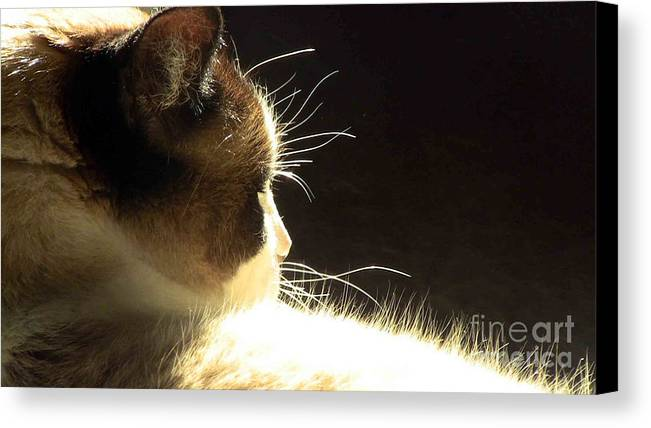 Cat Canvas Print featuring the photograph Peace Within by Tonia Antilla