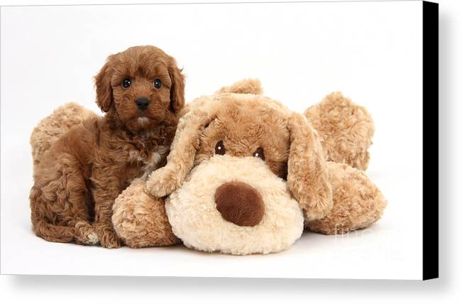 Animal Canvas Print featuring the photograph Puppy by Mark Taylor