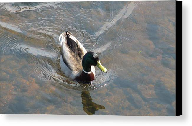 Lake Canvas Print featuring the photograph Spring Colors by Loretta Pokorny