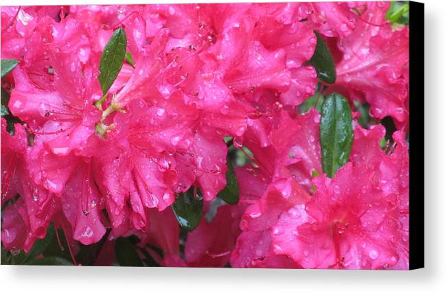 Nature Canvas Print featuring the photograph Sudden Showers by Loretta Pokorny