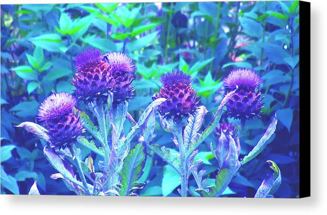 Thistles Canvas Print featuring the digital art Thistles by Louise Grant