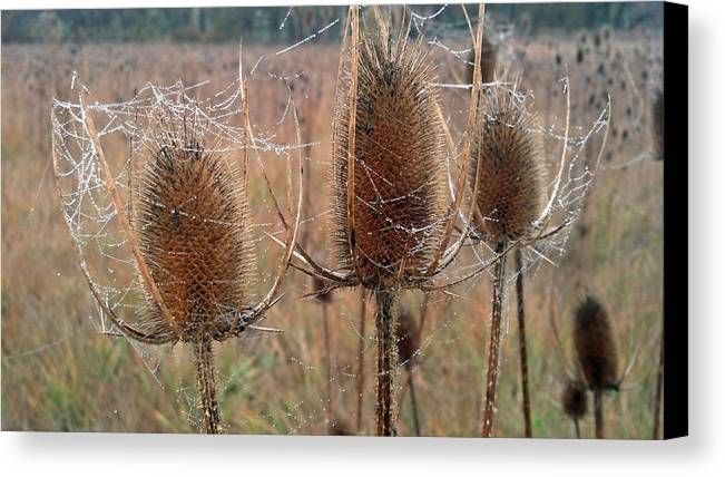 Brush Canvas Print featuring the photograph Touvelle Morning by Brian Orion