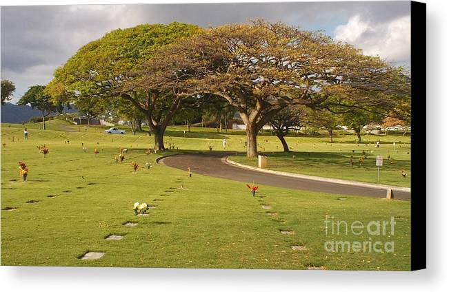 Nature Canvas Print featuring the photograph Two Trees by Silvie Kendall