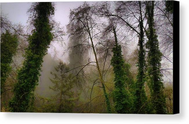 California Canvas Print featuring the photograph Aptos Creek by Kenny Green