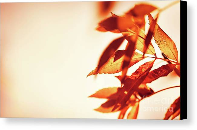 Abstract Canvas Print featuring the photograph Autumn Leaves Border by Anna Om