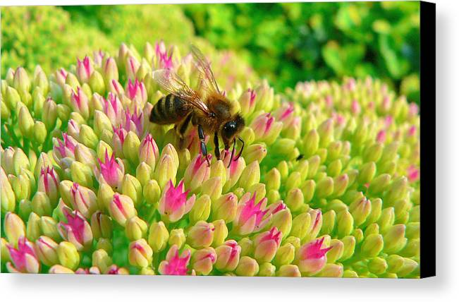 Flowers Canvas Print featuring the photograph Bee On Flower by Larry Keahey