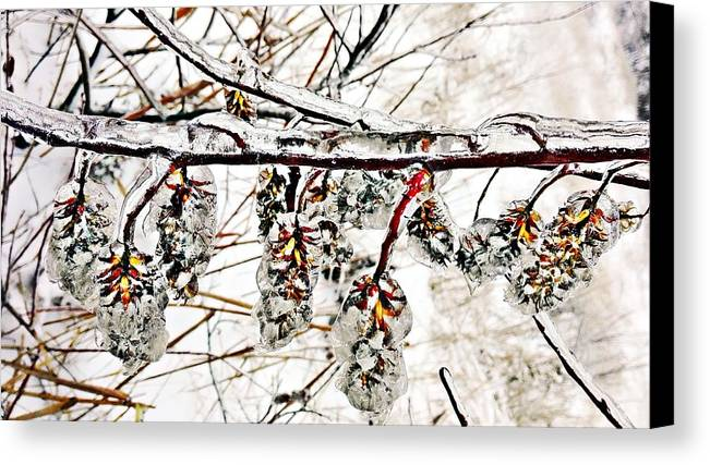 Winter Canvas Print featuring the photograph Cones-icicles. by Olga Vlasova
