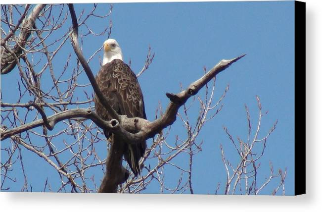 Eagle Canvas Print featuring the photograph Eagle Watching by Kathy Sevcik