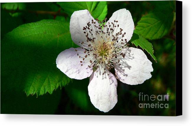 Flower Canvas Print featuring the photograph Flower In Shadow by Larry Keahey