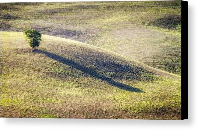 Antonio Violi Canvas Print featuring the photograph Lone Tree In Tuscany by Antonio Violi