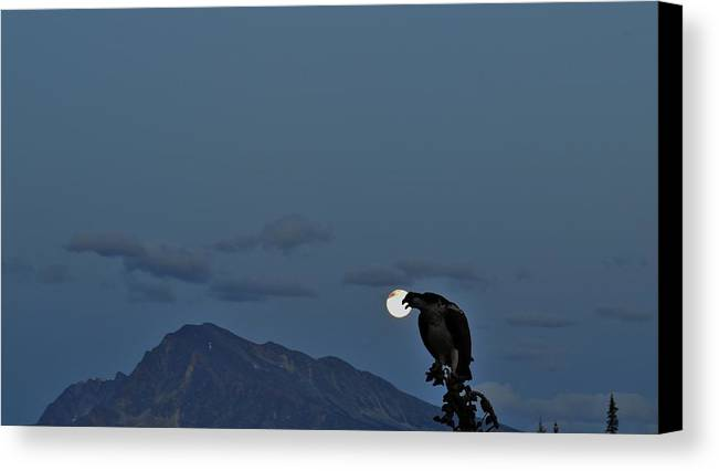 Osprey Canvas Print featuring the photograph Osprey Moon by David Parsons
