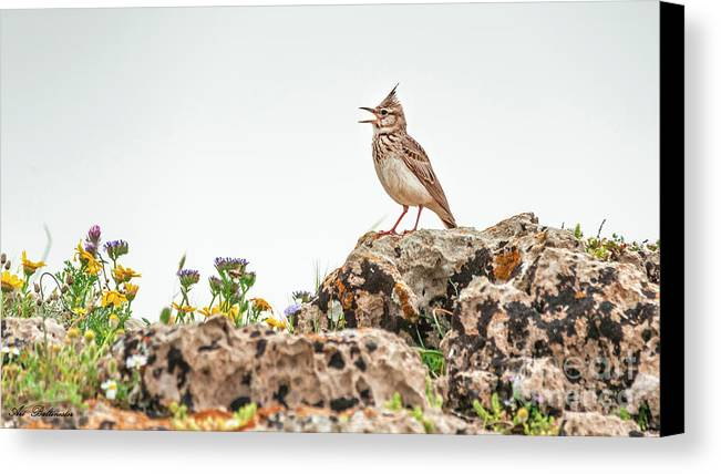 Bird Canvas Print featuring the photograph The Call by Arik Baltinester