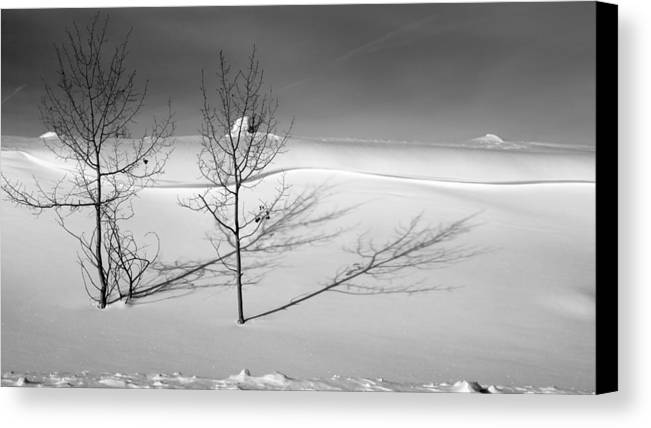 Nature Canvas Print featuring the photograph Twins by Skip Hunt