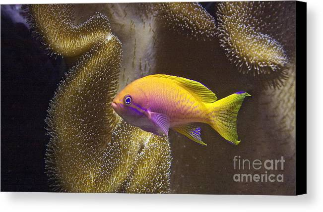 Shedds Canvas Print featuring the photograph Underwater Dream by Xn Tyler