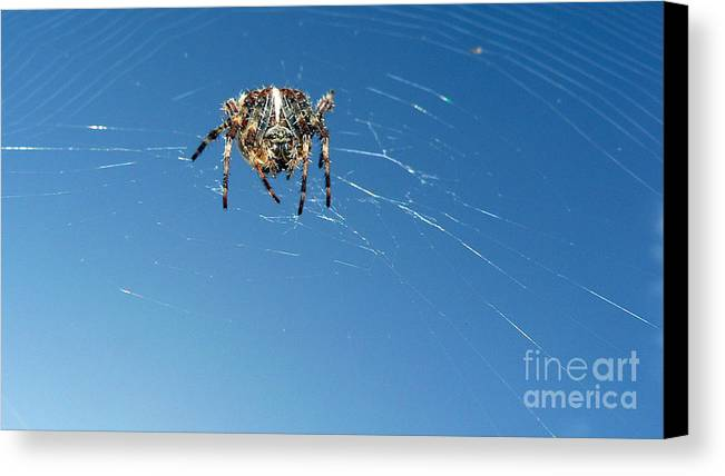Spider Canvas Print featuring the photograph Waiting by Larry Keahey