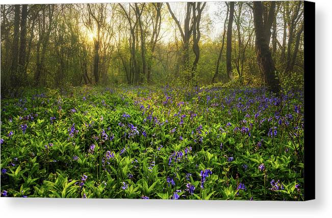 Blue Canvas Print featuring the photograph Wistow Wood Bluebells 1 by James Billings