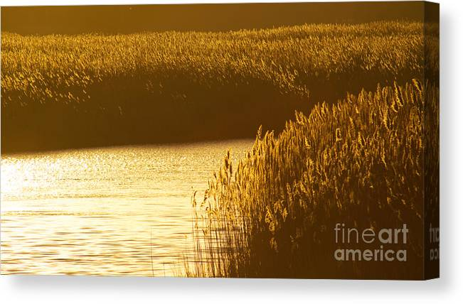 Marsh Canvas Print featuring the photograph Amber Waves by Joe Geraci