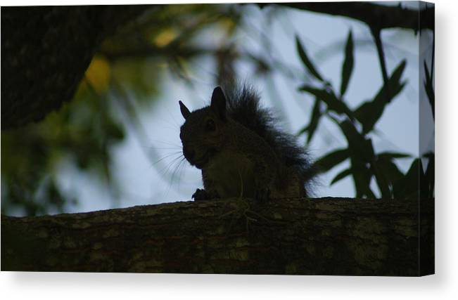 Squirrels Canvas Print featuring the photograph Angry Squirrel by Johnny Mcdonald