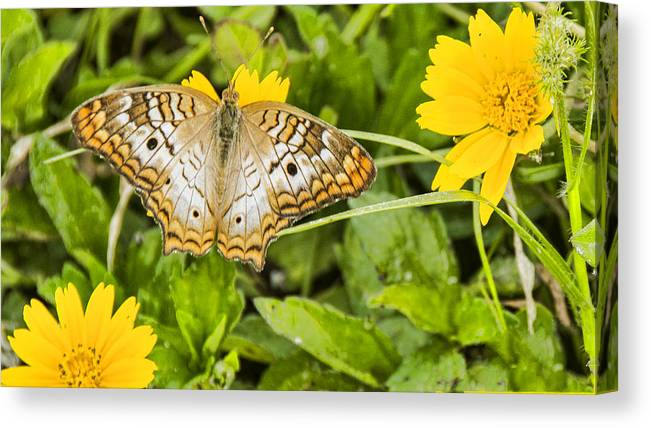 Butterfly Canvas Print featuring the photograph Butterfly On Yellow Flower by Don Durfee