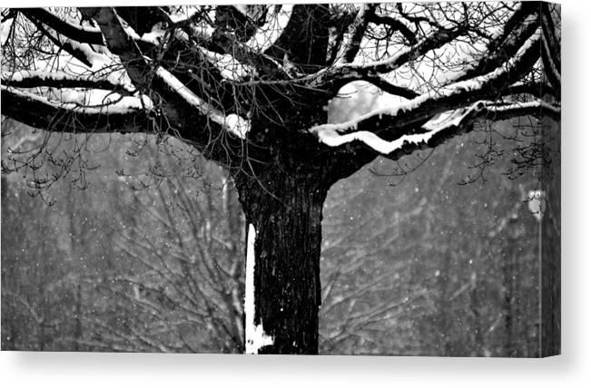 Iowa Canvas Print featuring the photograph Iowa Winter by Jordon Deutmeyer
