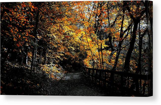 State Parks Il Canvas Print featuring the photograph Is This The Way Out by Tim G Ross