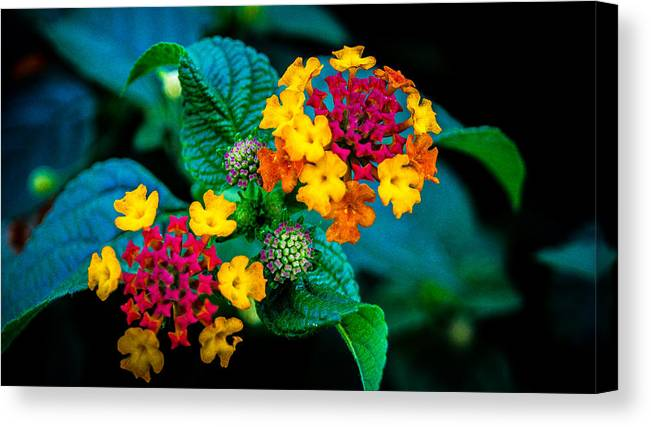 Flower Canvas Print featuring the photograph Red And Yellow Flowers by Jason Picard