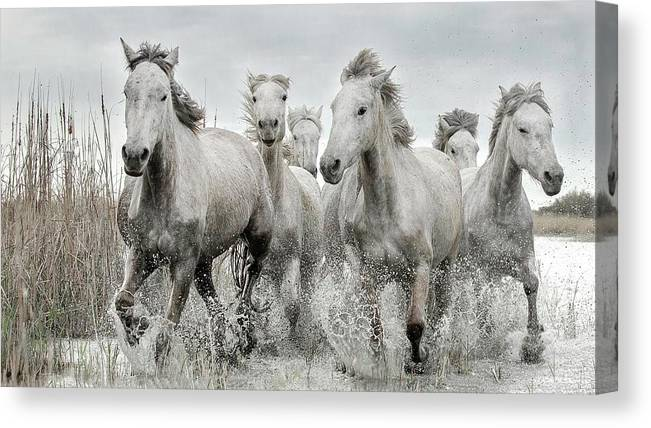 White Canvas Print featuring the photograph Running Gang by Lucie Bressy