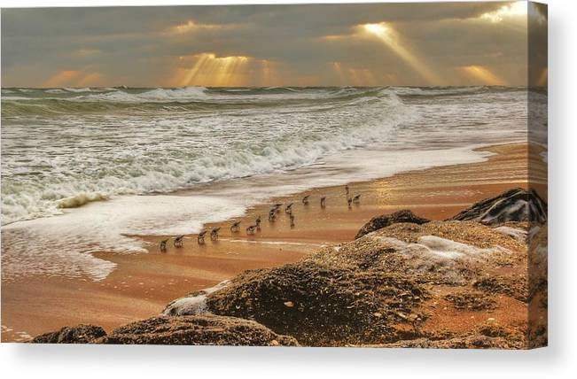 Beach Photographs Canvas Print featuring the photograph Sandpiper Sunrise by Danny Mongosa