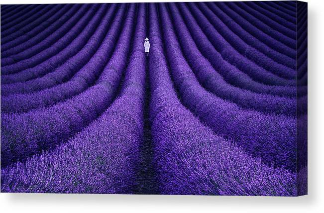 Purple Canvas Print featuring the photograph She by Lluis De Haro