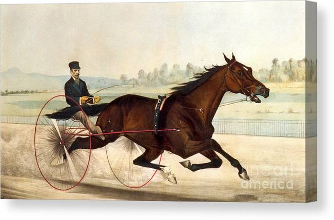 Currier And Ives Canvas Print featuring the painting The King Of The Turf by Currier And Ives