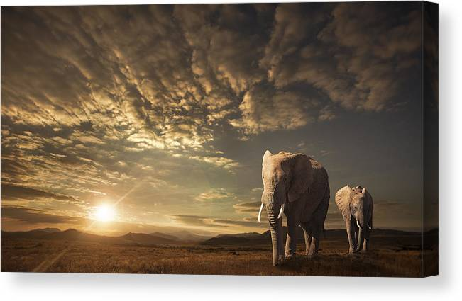 Elephants Canvas Print featuring the photograph Walking In Savannah by Jackson Carvalho