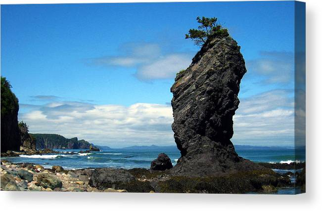 Chance Cove Canvas Print featuring the photograph Home Tree Home by Robert Lange