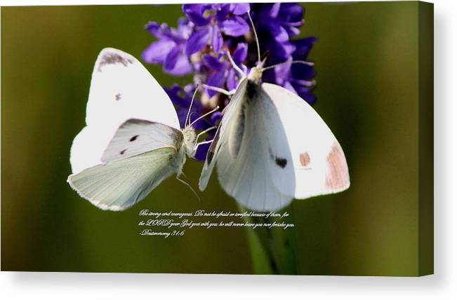 Dueteronomy 31 6 Canvas Print featuring the photograph Butterfly - Dueteronomy 31 6 by Travis Truelove