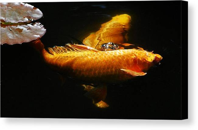 Koi Canvas Print featuring the photograph Koi Crossing by Don Mann