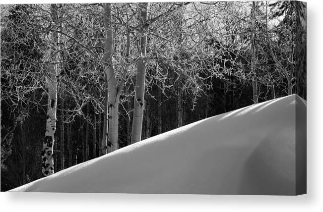 Colorado Canvas Print featuring the photograph Aspencade by Skip Hunt