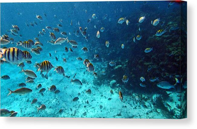 Caribbean Canvas Print featuring the photograph Caribbean Blue_1 by Wendy White