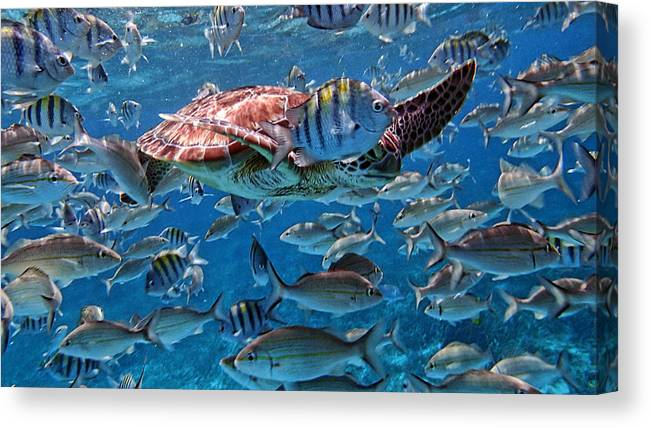Caribbean Canvas Print featuring the photograph Caribbean Blue_12 by Wendy White