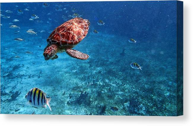 Caribbean Canvas Print featuring the photograph Caribbean Blue_13 by Wendy White