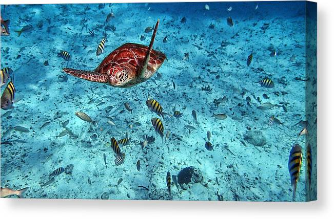 Caribbean Canvas Print featuring the photograph Caribbean Blue_6 by Wendy White