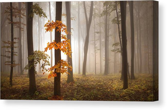 Landscape Canvas Print featuring the photograph In November Light by Franz Schumacher