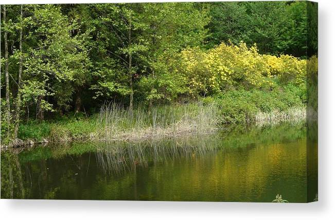 Spring Canvas Print featuring the photograph In Peace With Nature by Attila Balazs