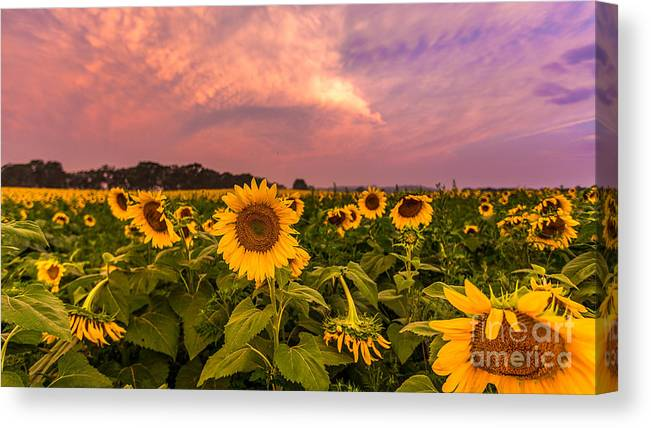 Clouds Canvas Print featuring the photograph Morning View by Andrew Slater