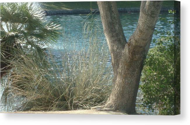 Trees Canvas Print featuring the digital art Natural Beauty by Sherri's - Of Palm Springs