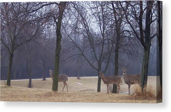 Deer Canvas Print featuring the photograph Visitors by Anna Villarreal Garbis
